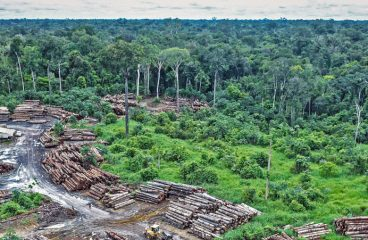 How Deforestation Paves Way For Human Sickness